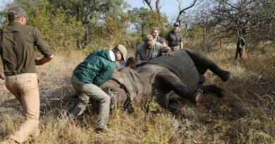 rhino-poachers-are-back-after-south-africa-eases-covid-19-lockdown-restrictions